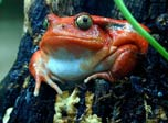 7art Croaking Frogs ScreenSaver