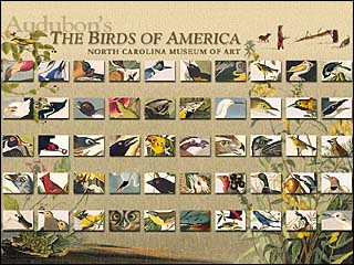 Audubon Birds of America Jigsaws