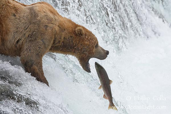 Caption the cartoon part deux page 131 for Bear catching fish