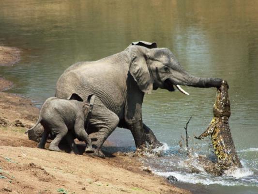 elephant online free