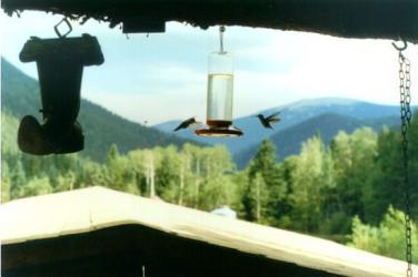 Hummingbird Secrets Revealed