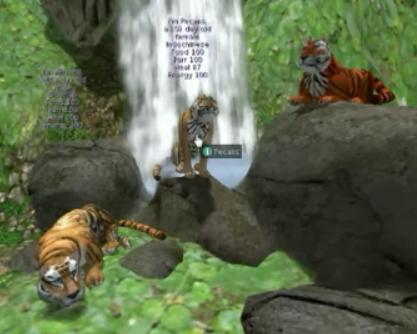 Tigers Play Free Online Tiger Games  Tigers Game Downloads